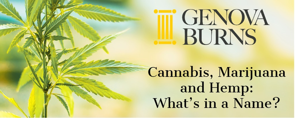 Cannabis, Marijuana and Hemp: What's in a Name?
